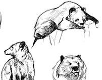 SKETCH/animal