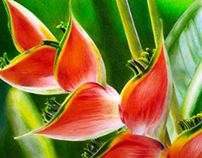 Heliconia flower drawing