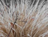 !Grass