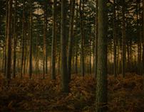 England :: Aspley Wood