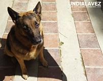 Vida de Perros 001, 002 & 003 - #Undialavez
