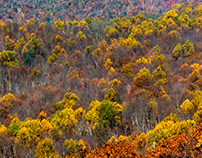 Autumn in the Blue Ridge Mountains, VA