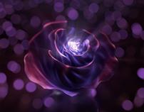 Birth of a Rose