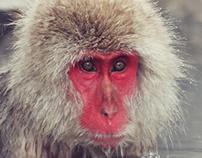 Snow Monkey Photography