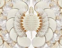 Les Merveilles blanches I