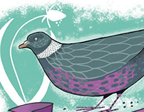 Garden Birds - Wood Pigeon
