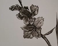 Plants in Pen and Ink