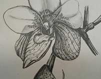 Plants in Pencil