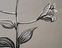Plants in Charcoal