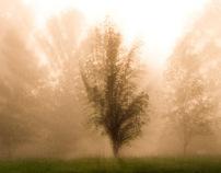 fogcity