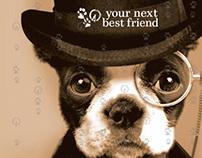 Your Next Best Friend