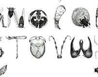 昆虫字体设计