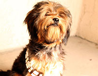 Teddy The Chewbacca Dog - Animal Photography
