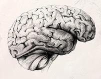 Anatomie (COPY)