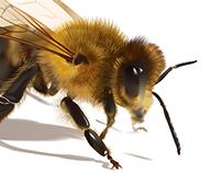 Realistic Honey Bee