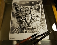 TeSz Cat