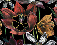 Tulip (for INCITY fashion brand)