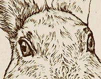 rabbit asks you