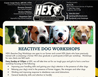 HEX Dog Training & Behavior Modification
