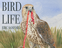 """Bird Life"" Nature Magazine Cover- Falcon"
