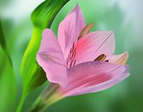 Flower...!