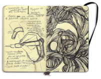 Lines from my Moleskine