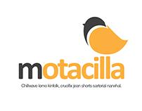 Motacilla