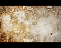 muffa sul muro | mold on the wall