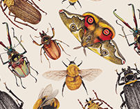 Insectos Nativos