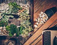 Esotic Plant
