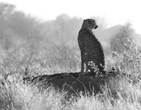 Overlanding: Cheetah