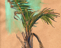 Studies: Palm Trees of Hawaii