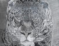 jaguar - charcoal