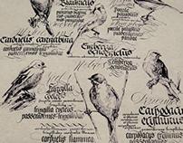 Birds in calligraphy
