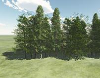 3D Renders para Especies de Plantaciones Panamá - GIZ
