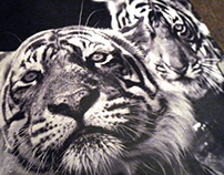 David Yarrow Photography | Saatchi & Saatchi