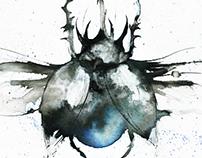 Beetle Illustrations