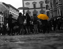 Yellow florence - Photo