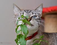 Rocky, a sweet kitten