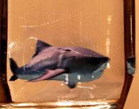 Shark in Water Glass