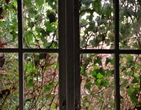 Contemplating windows