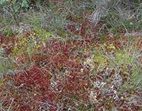Flanders Moss - A Stirling Bog