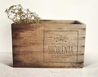 My Precious Suculenta