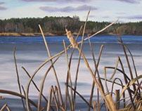 Grass Lake : Winter