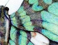 Graphium antheus