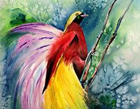 BIRD OF PARADISE-NEW GUINEA