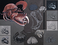 Crab's shape exploration