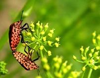 A bug's life. :)