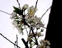 The Spring Rebirthing
