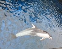 Vancouver Aquarium 2008